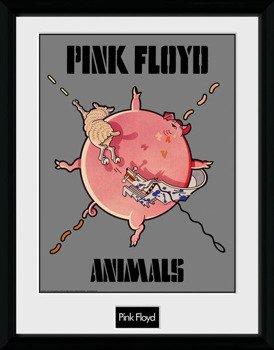obraz w ramie PINK FLOYD - ANIMALS
