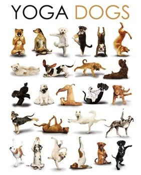 plakat YOGA - DOGS COMPILATION