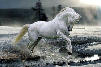 plakat BOB LANGRISH - HORSE SNOW