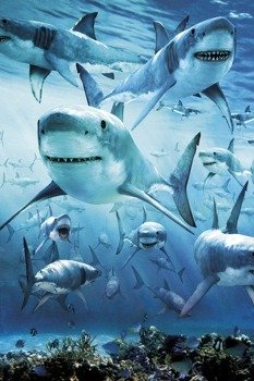 plakat SHARK - INFESTED